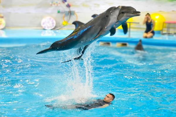 Dolphins Bay Phuket (1)