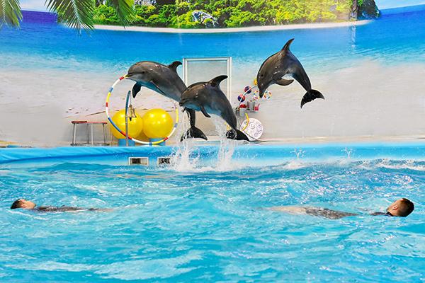 Dolphins Bay Phuket (5)