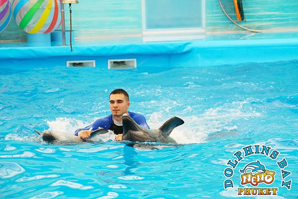 Dolphins Bay Phuket (6)